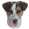 Pasemske nalepke, različne pasme (2 kos) jack russell terier (kratkodlaki)