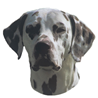 Pasemske nalepke, različne pasme (2 kos) dalmatinec