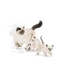Royal Canin Mother & Babycat - perutnina