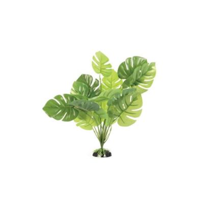 Aquatlantis rastlina za terarij Monstera - 30 cm