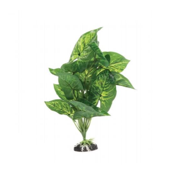 Aquatlantis rastlina za terarij Aluminum Plant - 30 cm
