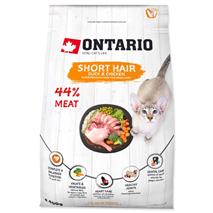 Ontario Cat Shorthair - raca in piščanec