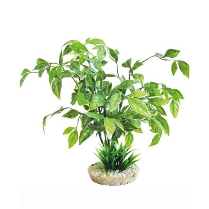 Sydeco dekor Echinodorus Plant
