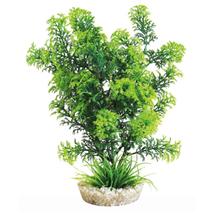 Sydeco dekor Cabomba Plant