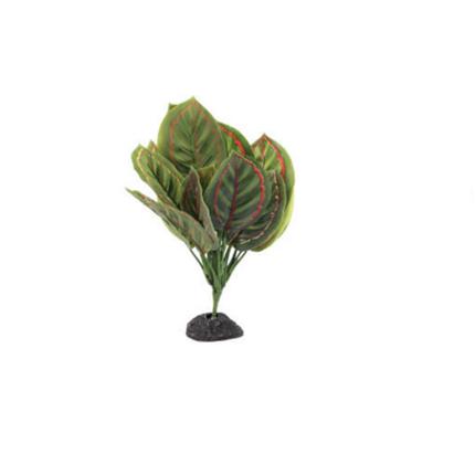 Aquatlantis rastlina za terarij Stripes Plant Red - 30 cm