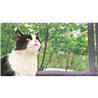 Pawise zaščitna mreža za mačke