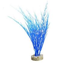 Sydeco dekor Acorus Blue Ocean