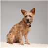 Tickless ultrazvočni repelent za živali Pet