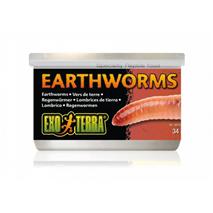 Exo Terra Earhworm deževniki - 34 g