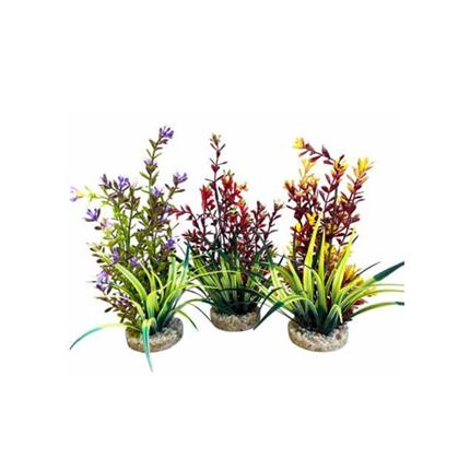 Sydeco dekor Flowering Plant