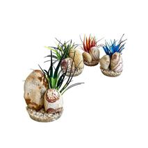 Sydeco dekor Rainbow Stone Plants