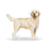 Royal Canin Labradorec Adult