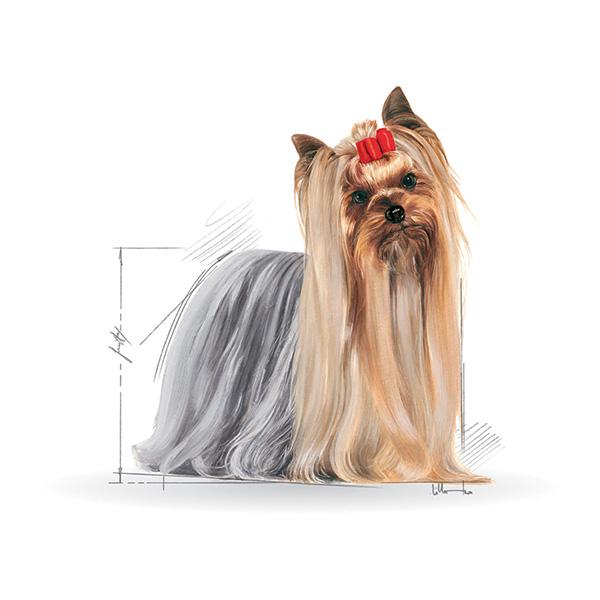 Royal Canin Yorkshirski terier Adult