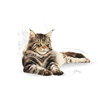 Royal Canin Adult Maine Coon - perutnina