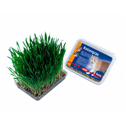 Nobby mačja trava v škatli - 100 g